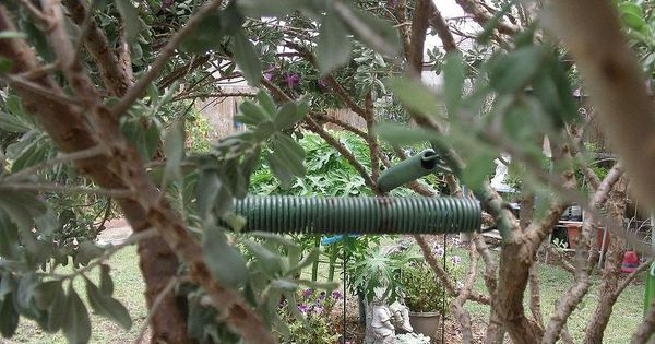 Metal spring from old trampoline outdoor living upcycling and spring - Leroy merlin arbor ...