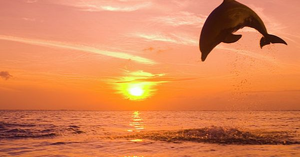 Bottlenose Dolphin (tursiops Truncatus) Jumping Out Of Water, Sunset Photograph by Rene
