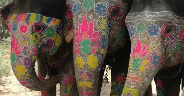 Indian Elephant Art | The Pink City – Jaipur – Elefantastic
