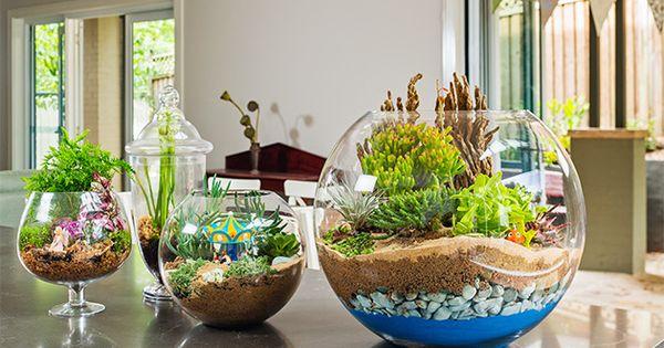 How to make a terrarium: Create a mini garden in a glass