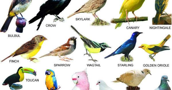 birds name with pictures pdf