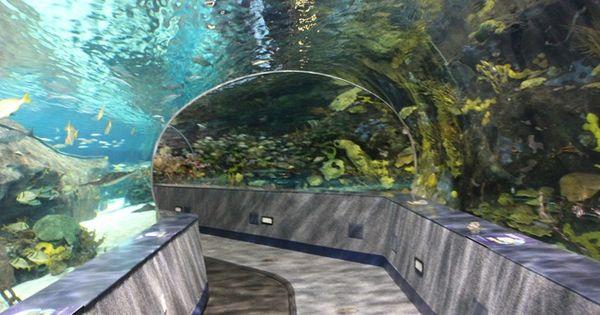 Ripleys Aquarium Pigeon Forge Gatlinburg Tn