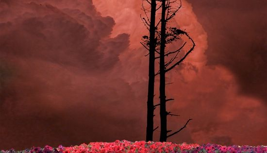 Tall trees, dramatic clouds and a flower field by Peter Holme III