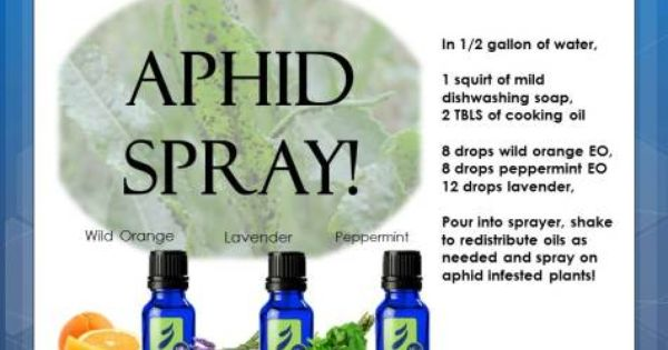 Aphid Spray Doterra Oils And Uses Pinterest Sprays