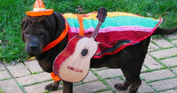 Pin By Pawderosa Ranch On Taco Doggo In 2020 Pet Halloween Costumes Dog Halloween Costumes Diy Dog Costumes