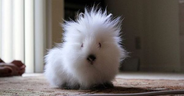 Look at that hair! I want to pet it!