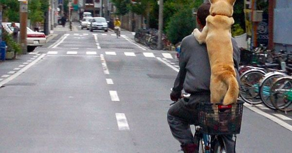 #dog riding a bike with his bestfriend