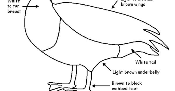 bird migration coloring pages - photo#28