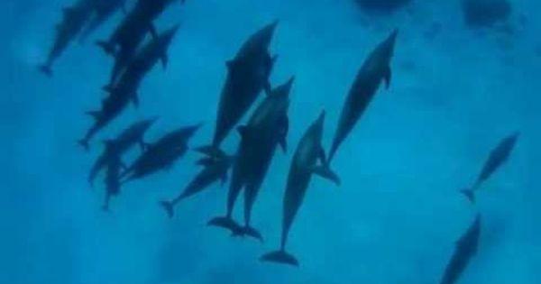 Uno Splendido Viaggio Per Nuotare Con I Delfini Nel Loro Habitat