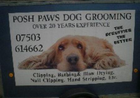 Posh Paws Dog Grooming English Cocker Spaniel Puppies Popular Dog Breeds
