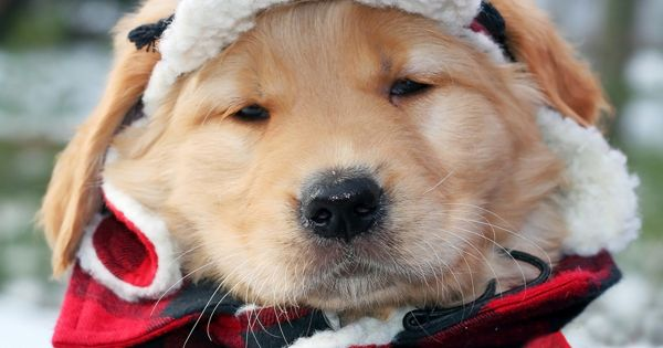 Most of us enjoy dressing up our dogs, even if ita??s just a shirt. Winter provides us with an a??excusea?? to dress our dogs up even more, because of the cold weathe | See more about Winter Clothes, Dogs and Cold Weather.