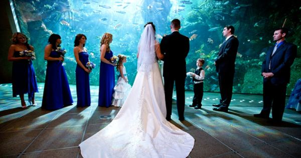 Gorgeous Seattle Aquarium You Can Get Married At Georgia