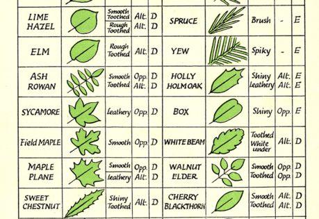 Tree/Leaf Identification- nature study