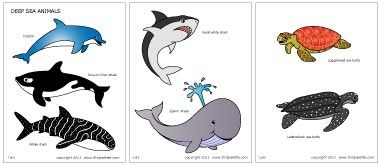 Ocean Animals This Site Has Great Free Themed Printables Sea Animals Deep Sea Animals Ocean Animals