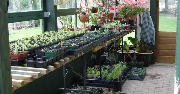 am nagement d 39 une serre de plantation d co jardin pinterest plantation serre et am nagement. Black Bedroom Furniture Sets. Home Design Ideas
