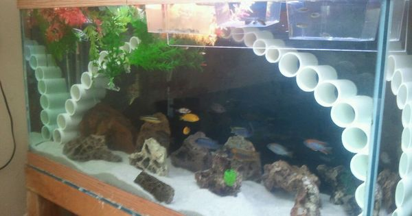 Awesome cichlid tank decorations 2 decorations for fish for African cichlid tank decoration