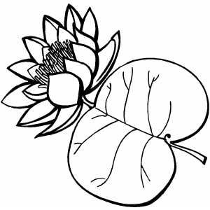 Flower With Big Leaf Printable Coloring Page Free To Download And Print Leaf Coloring Page Coloring Pages Printable Coloring Pages