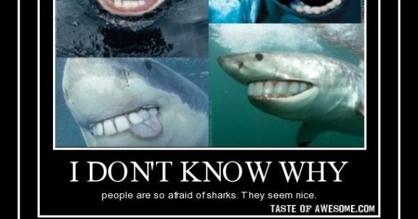 Suddenly i am not so scared of sharks if they had teeth for Bill engvall dork fish