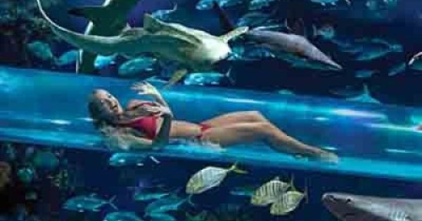 Golden nugget in the golden nugget 39 s pool in las vegas you for Aquarium insolite