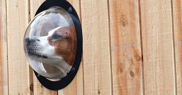 Give your dog a window to the world with the PetPeek Fence