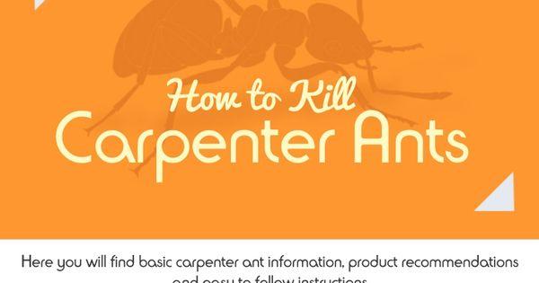 Kill Carpenter Ants And On Pinterest