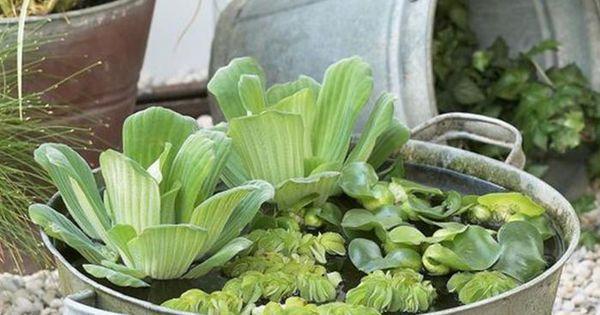 Une bassine en zinc s 39 adapte tous les jardins zen ou for Tous les plantes