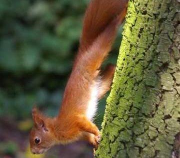 So Locken Sie Eichhornchen In Den Garten 1000 In 2020 Squirrel Winter Animals Life Hacks Pictures
