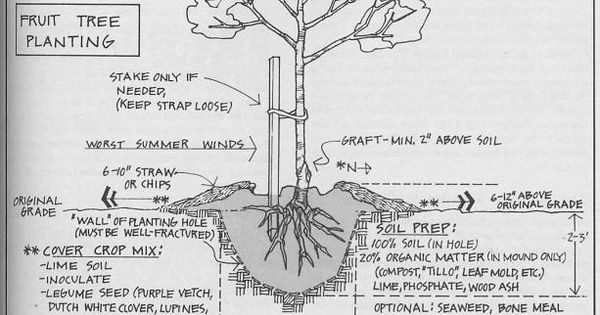 Nice article on care for bare root fruit trees Jardin