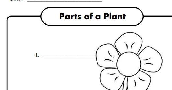 parts of a plant worksheet for k free science life science biology pinterest worksheets. Black Bedroom Furniture Sets. Home Design Ideas