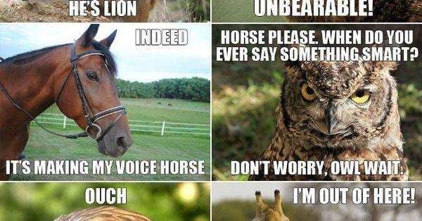 Aninimal Book: Animal Meme conversation! Hahaha I seriously couldn't stop ...