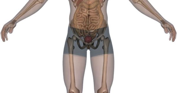 klokhuis menselijk lichaam