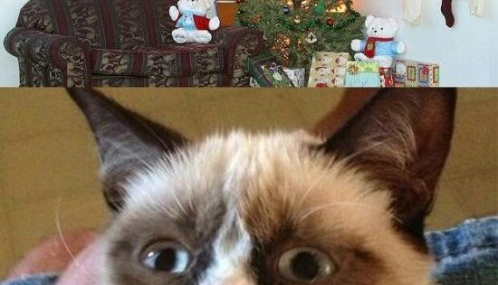 grumpy cat meme christmas tree - photo #12