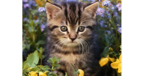Cat Sitting In Flower Garden Postcard Zazzle Com Cat Sitting Cute Baby Animals Cat In Heat