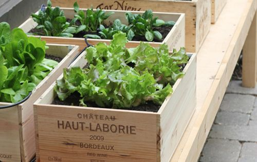 DIY: Small Space Vegetable Garden : One clever way to literally go-green,