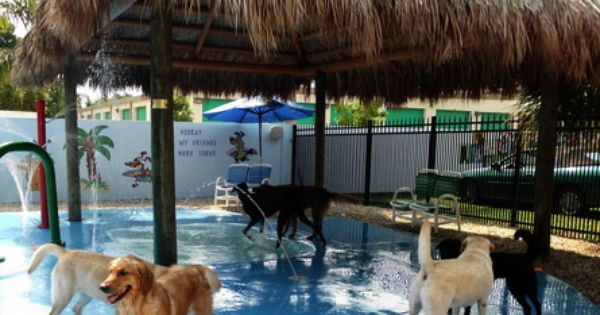 Repinned St Pete Dog Daycare Love My Dog Resort Water Park Dog Playground Luxury Dog Kennels Dog Daycare