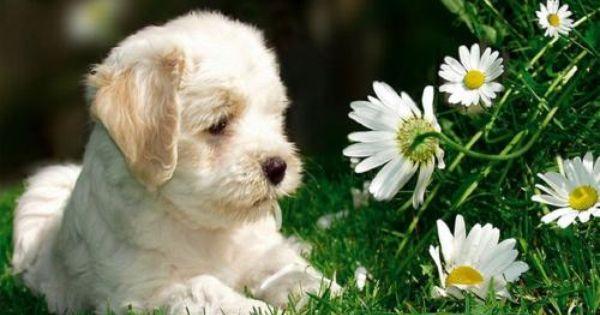 C mo alejar a los perros del jard n para m s informaci n for Ahuyentar perros del jardin
