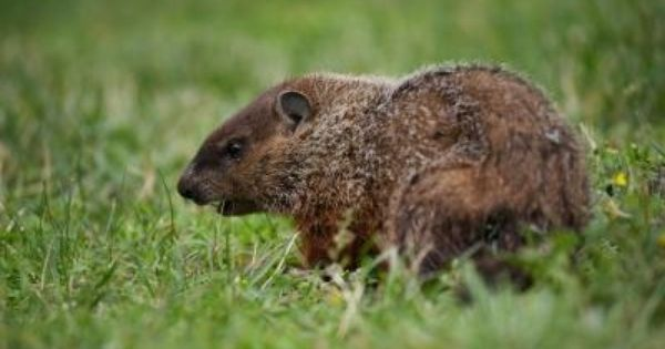 3b49646a413ebd7794df1ebed2c12180 - How To Get Rid Of Groundhogs In Vegetable Garden