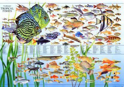 Community Freshwater Fish