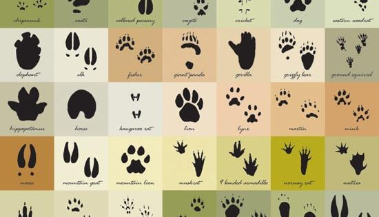 Great for budding nature detectives! Find out how to identify animals by