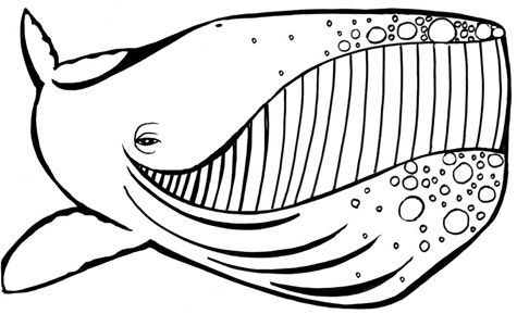 Whaleface2 Whale Coloring Pages Animal Coloring Pages Coloring Pages