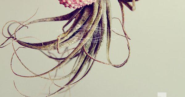 Cool project idea! Jellyfish Air Plant // Sea Urchin Wedding Favor Decor