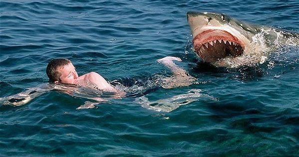 Great White Shark Attack | Shark attack Swimmer - Great White Shark