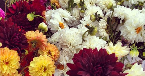 Beautiful flowers at the farmers market! | @designconundrum