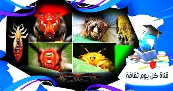الحشرات 100 نوع من النزلاء من الحشرات تعيش معنا في منازلنا وانت لا تعلم Frosted Flakes Cereal Box Cereal Box Frosted Flakes