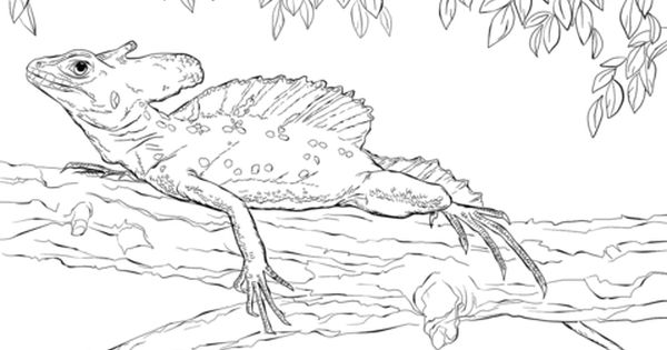 Basilisk Lizard Coloring Pages Free Coloring Pages Coloring Pages Basilisk Lizard Free Coloring Pages