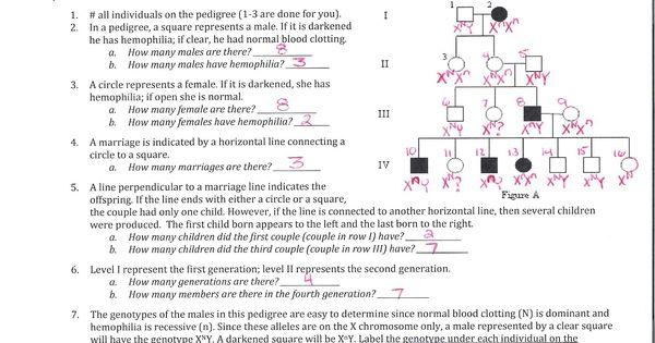 pedigree worksheet answers to pedigree worksheet – Human Pedigree Worksheet