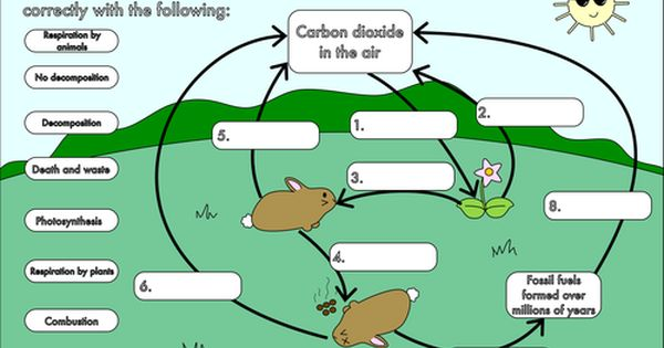 The Carbon Cycle Worksheet 1 With Images Carbon Cycle