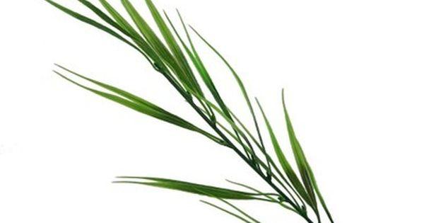 Sztuczne Rosliny Galazka Dekoracyjna Trawa Wzor 3 6819986493 Oficjalne Archiwum Allegro Plants Wreaths