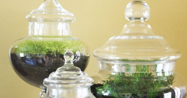 Apothecary Jars - used for growing plants.