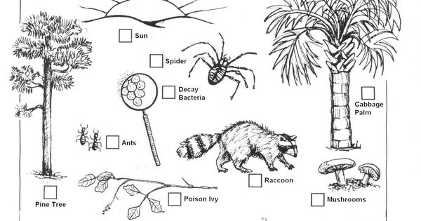 decomposers worksheets for kids archbold biological station ecological research. Black Bedroom Furniture Sets. Home Design Ideas